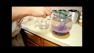 How To Clean A Fishbowl