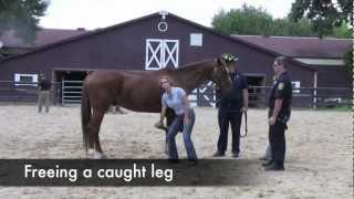 Equine rescue clinic for Police & Firefighters (HARPS of Barrington)