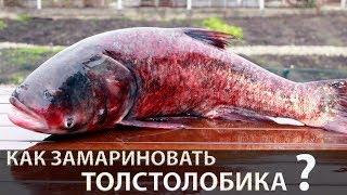 Маринованный толстолобик   Как замариновать толстолобика (вкусный рецепт маринованной рыбы)