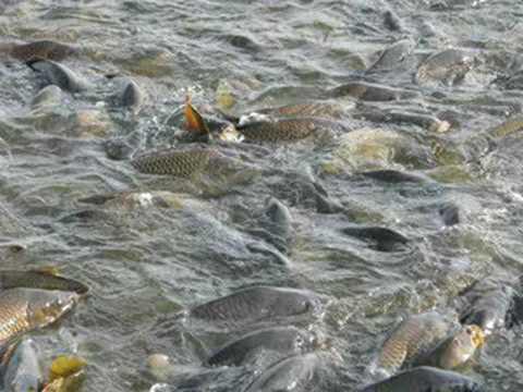 Adrian Belew --- Fish Head mp3