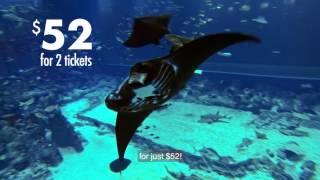 SG52 - S.E.A. Aquarium
