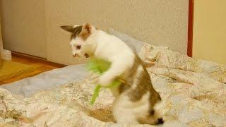【そのぬいぐるみ生きてる?】とても一人で遊んでいるように見えない猫