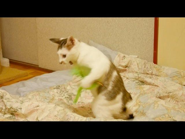 一人遊びが上手な子猫