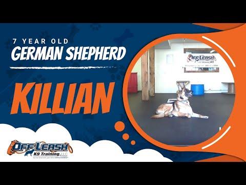 7-Year Old Aggressive German Shepherd, 'Killian:' Best German Shepherd Trainers in Virginia