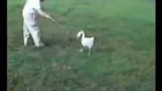Videos Engraçados de Animais