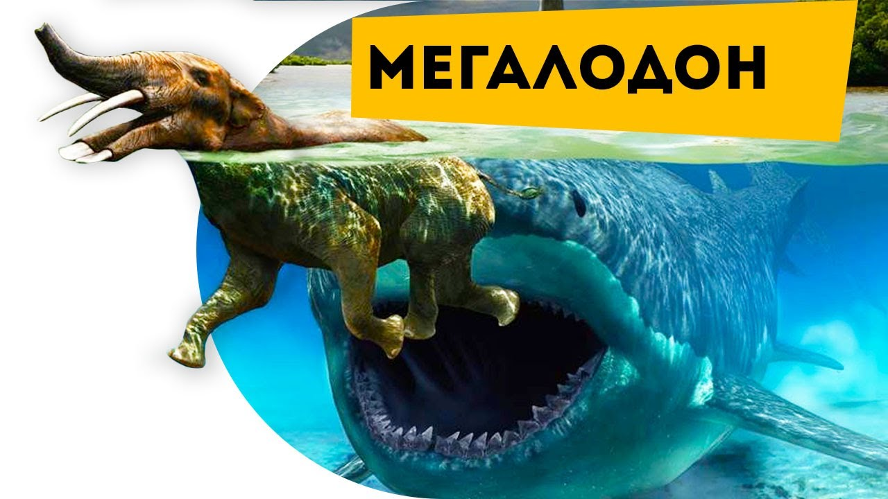 Монстр глубины Мегалодон   Динозавры   Мег