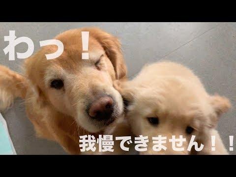 今日は子犬ンとマテトレーニングをしてみます