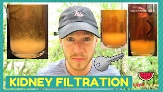 KIDNEY FILTRATION is the ULTIMATE key to health!