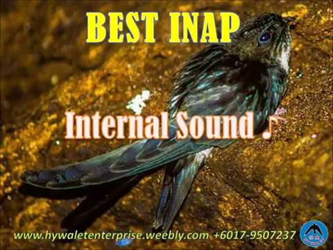"Swiftlet Sound-""Best Inap"""