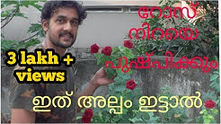 How to induce Flowering of rose ! now easy ! Malayalam