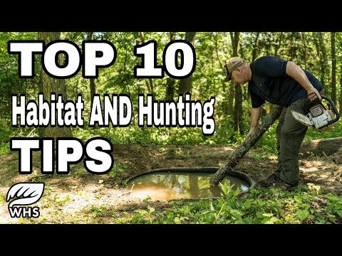 Top 10 Deer Habitat And Hunting Tips For Small Parcels