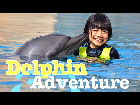 Dolphin Adventures @ Aquaventure Waterpark