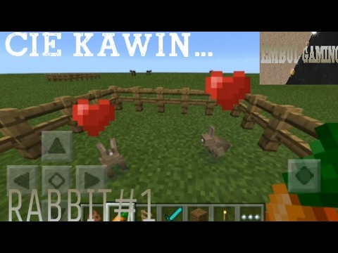 cara-kawinin-hewan-di-minecraft---cie-kawin---rabbit#1