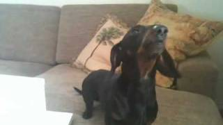 Dachshund Song