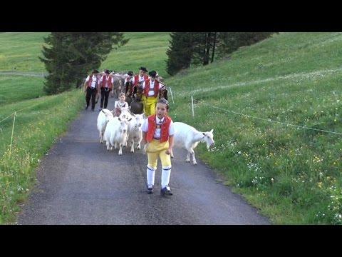 Alpauffahrt Schwägalp 2014