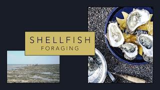 Shellfish Foraging with The Wild Kitchen • Travel Vlog