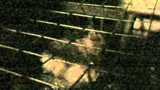 Ночной крик японских перепелов