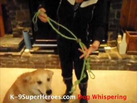 Bailing Twine Dog Harness