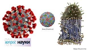 Коронавирус COVID-19: что дальше? | Вопрос науки с Алексеем Семихатовым