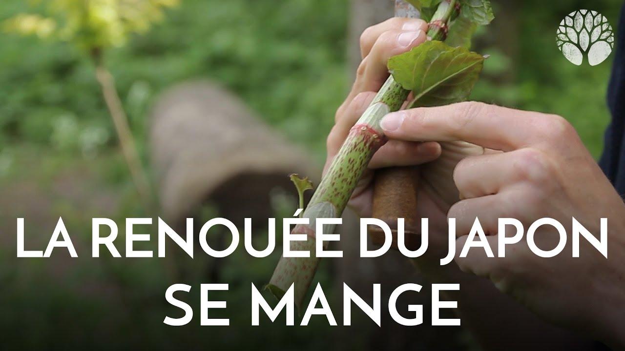 Les Plantes Miracles...Si le pire arrive...( Prophéties ) Maxresdefault