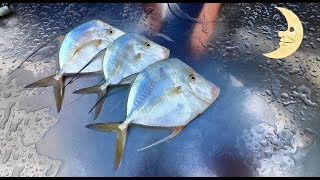 Catch And Cook Moon Fish!! Eating An EXTREMELY Thin Fish!