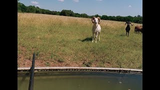 I Hid Under Water & Killed a Ram With a Blowgun