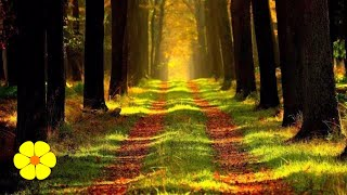 2 Hours Relaxing Piano Music Meditation Relax - A Walk in the Forest Sleep Relaxation Stress Relief