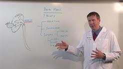 hq2 - Biopsy Of Mass On Kidney