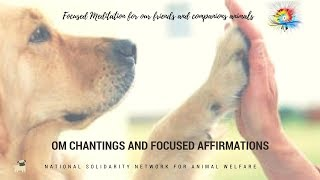 EN - Focused Meditation for our friends and companions animals