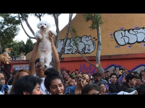 Animals receive blessings in annual Mexican tradition