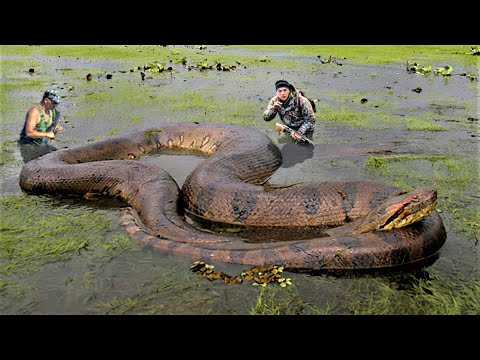 Download 10 Biggest Snakes Ever Captured !