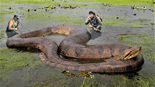10 Biggest Snakes Ever Captured !