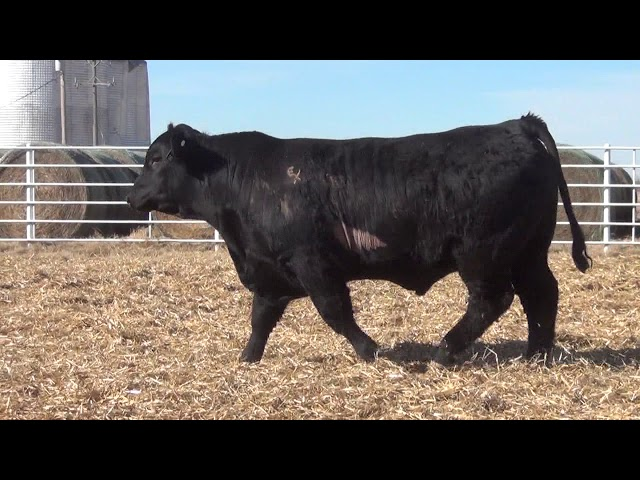 Express Ranches Lot 361
