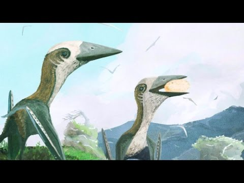 Tiny Pterosaur Discovered From The Age of Flying Giants   Prehistoric News