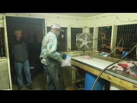 OJ McCray - Hill's Landing Fish Camp - South Carolina