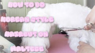 Maltese Haircut Korean Style Cut Tutorial