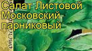 Салат листовой Московский парниковый. Краткий обзор, описание характеристик Moskovskiy parnikovyy