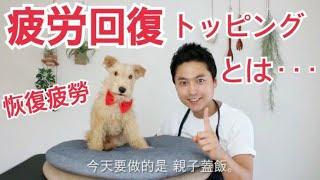 手作り犬ご飯(狗狗的鮮食食譜)『親子丼』