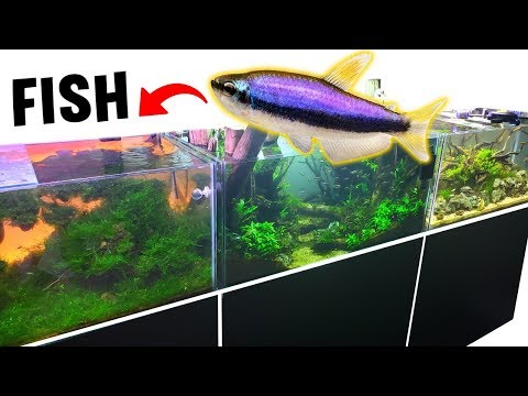 Crazy Fish JUMP Tanks? *NEW* Guppy BABY Fish AQUARIUM!