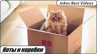 Подборка приколов # 8 Коты и коробки | Funny cats