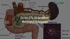 hqdefault - Analisis Biokimia Pada Diabetes Melitus