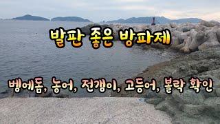 발판 좋은 방파제 / 벵에돔, 농어, 전갱이, 볼락 확인