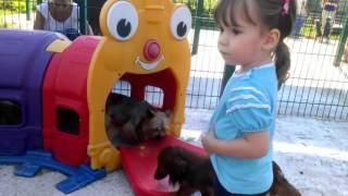 Питомник собак Экскурсии Милана Кормление собак dog kennel tours(, 2016-09-12T06:23:59.000Z)