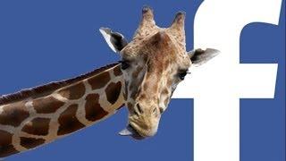 O lado oculto da Brincadeira da Girafa no Facebook