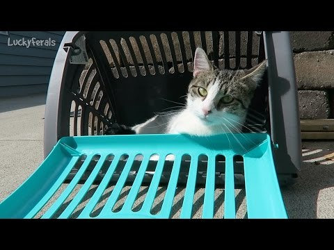 SportPet Designs Pet Carrier Collapsible Cat Carrier Travel Master Product Review