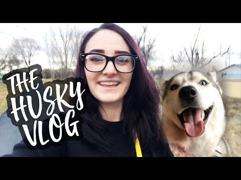 The Husky Vlog Week 1: Dog Park, Airport, and more!
