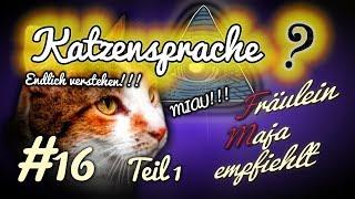 Katzensprache - 8 Katzenemotionen und Signale, die ihr bisher falsch gedeutet habt. #016