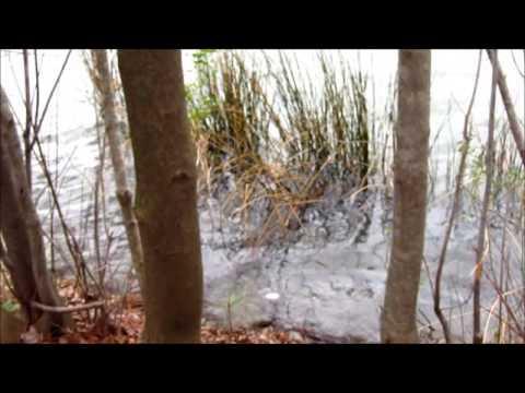 Oak Grove Park Chesapeake, Virginia
