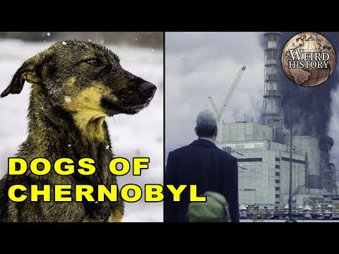 All The Dogs Still Living In Chernobyl - YouTube