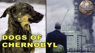 All The Dogs Still Living In Chernobyl
